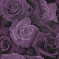 Arthouse Austin Rose Purple 675601